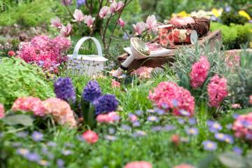 atmosphere, decoration «Miscellaneous», Decoration, Gießkanne, hyacinth (Genus), Hydrangea macrophylla, impression, plant bed, rose (Genus)