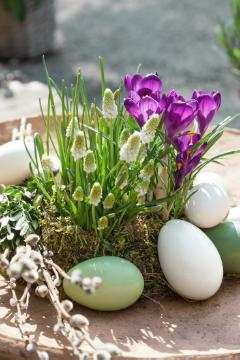 crocus (Genus), Easter egg, Frühlingsblüher, Goat Willow, Hyacinthus (Genus), Mixture (Mix), Pflanzschale, Plant container «Accessories in the Garden», plant container «Gefäße», Springtime