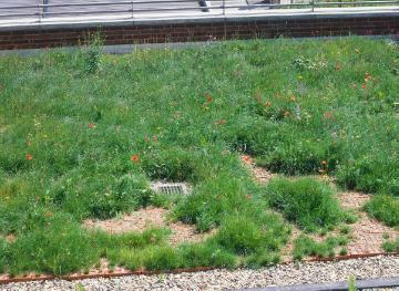 Flower meadow, Mixture (Mix), Urban Garden