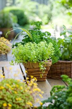 atmosphere, basket, impression, Kräutermischung, origanum (Genus), Parsley, Plant container «Accessories in the Garden»