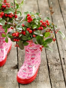 atmosphere, Gaultheria procumbens, Plants for Acid Soil, rubber boots, snowberry (Genus)