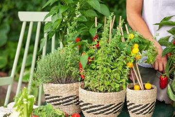 food «dish», Food «Miscellaneous», Grillen im Garten, Herbs and Aromatics, Kräutermischung, Lifestyle, Origanum vulgare subsp. vulgare, Thymus vulgaris, Tomato, Vegetable dishes, vegetables mix, woman