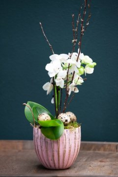 Easter eggs, moth orchid (Genus), Quail eggs