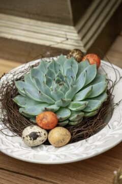 Easter eggs, Easter nest, Echeveria (Genus), Quail eggs