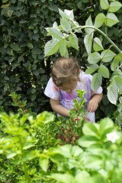 European Hornbeam, girl, Gooseberry, nibble garden
