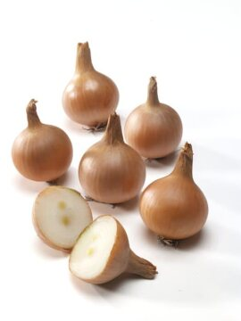 onion, white background